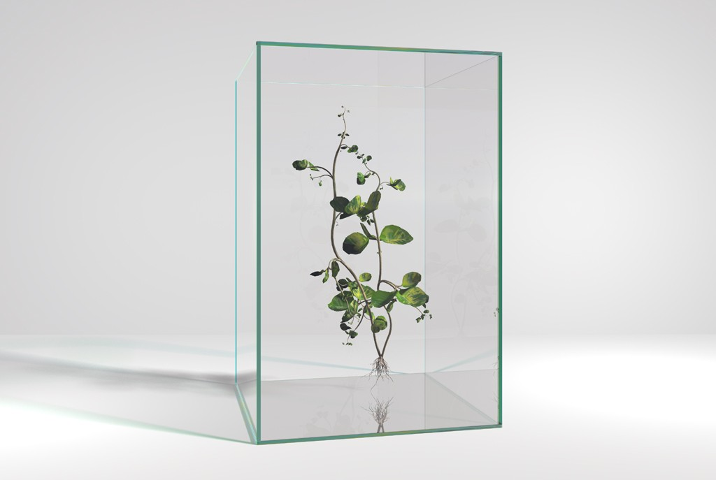 Plantje in glazen kubus, computertekening (Bryce software), 30x21 cm, 2006