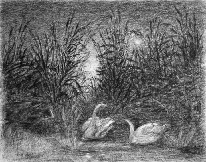Twee zwanen, houtskool op papier (naar Caspar David Friedrich), 48x38 cm, 2002